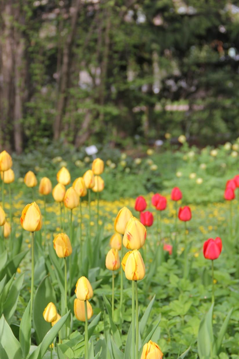 Helsinki Botanical Gardens