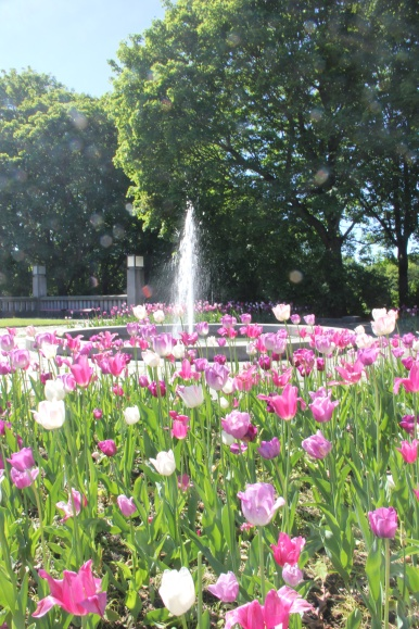 A morning in Oslo park