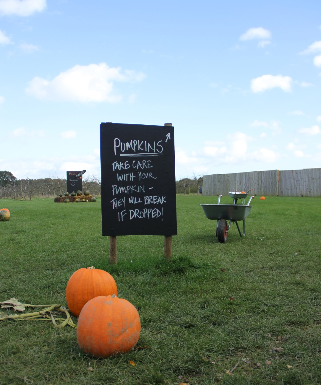 Pumpkin patch Norwich