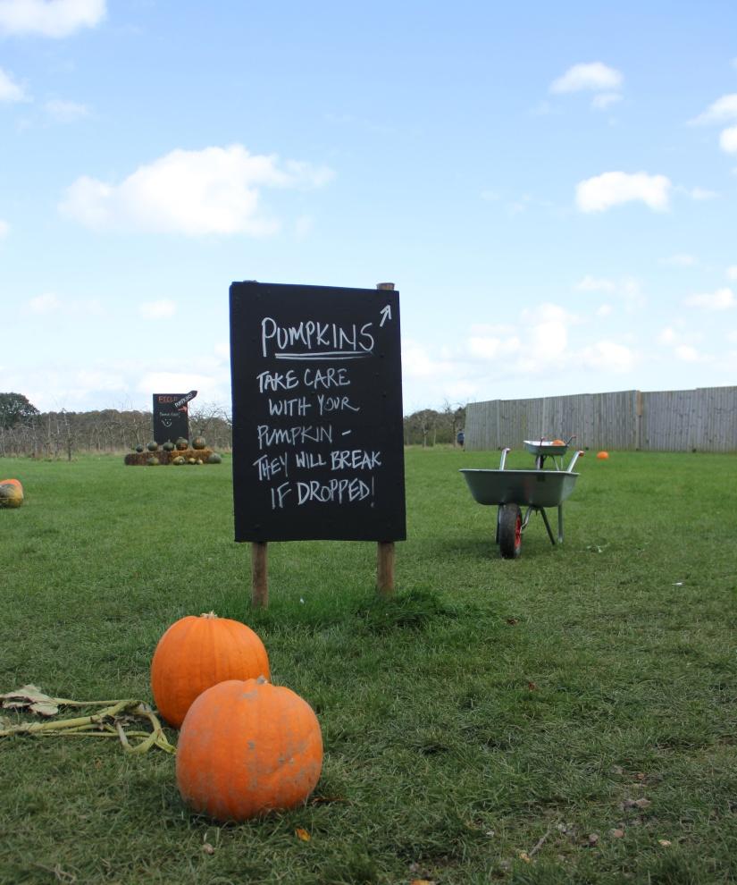 Pumpkin patch Norwich
