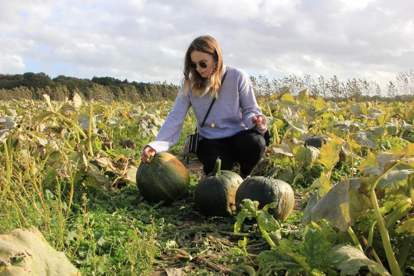 Pumpkin Picking Norwich | White House Farm