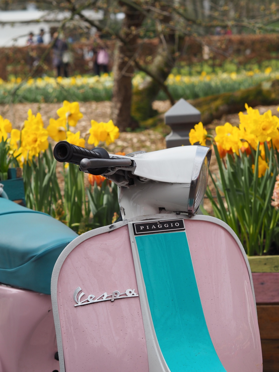 Postcards from Keukenhof Vespa