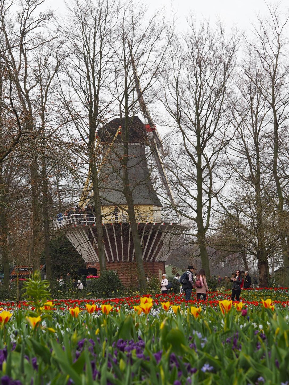 Keukenhof Lisse Windmill in spring
